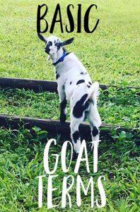 basic goat terms