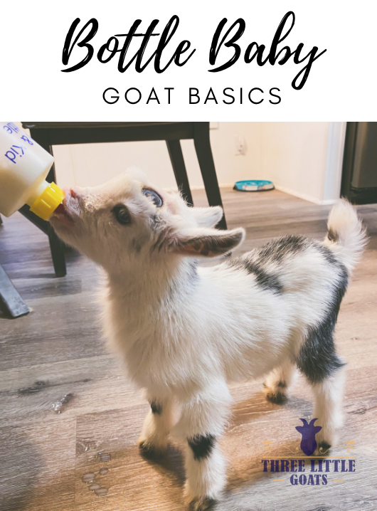 Bottle Feeding Goats - The Basics