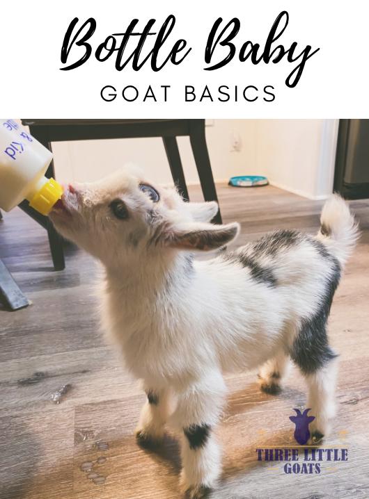 Bottle Feeding Goats - The Basics